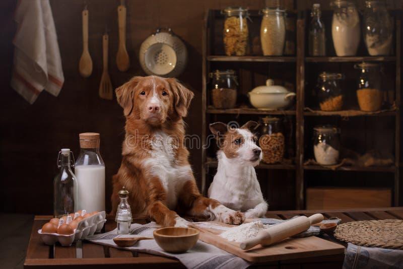Två hundkapplöpning lagar mat i köket Älsklings- hemmastatt arkivfoton