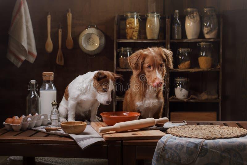 Två hundkapplöpning lagar mat i köket Älsklings- hemmastatt fotografering för bildbyråer