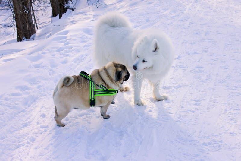 Två hundkapplöpning mötte för går i parkerar royaltyfri fotografi