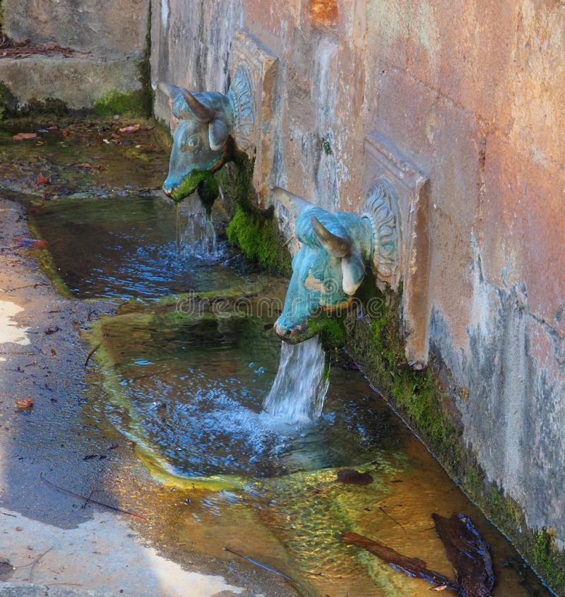 Två huvud av oxar i San Medardo, Huesca royaltyfria bilder