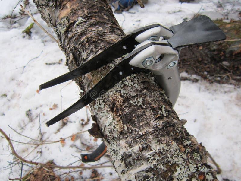 Två icetools på träd royaltyfri bild