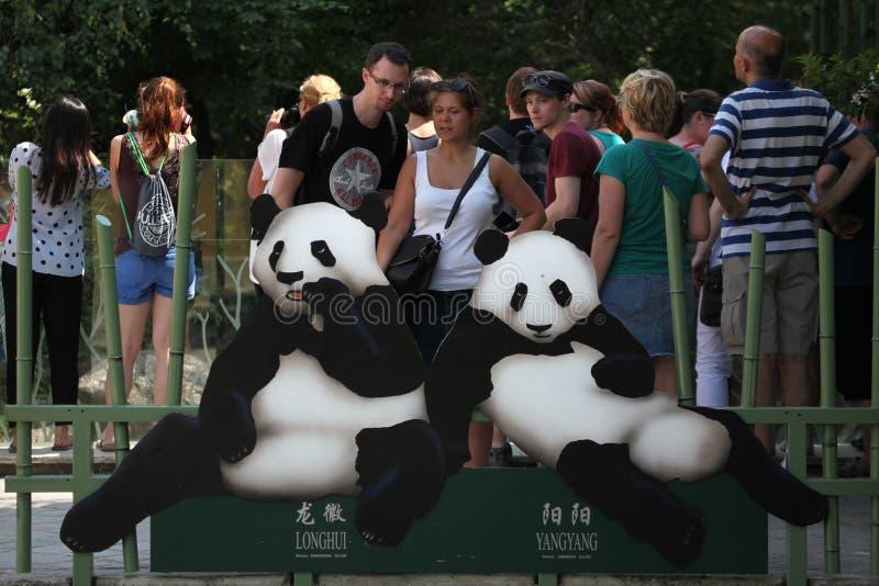 Två jätte- pandor (Ailuropodamelanoleucaen) arkivfoton