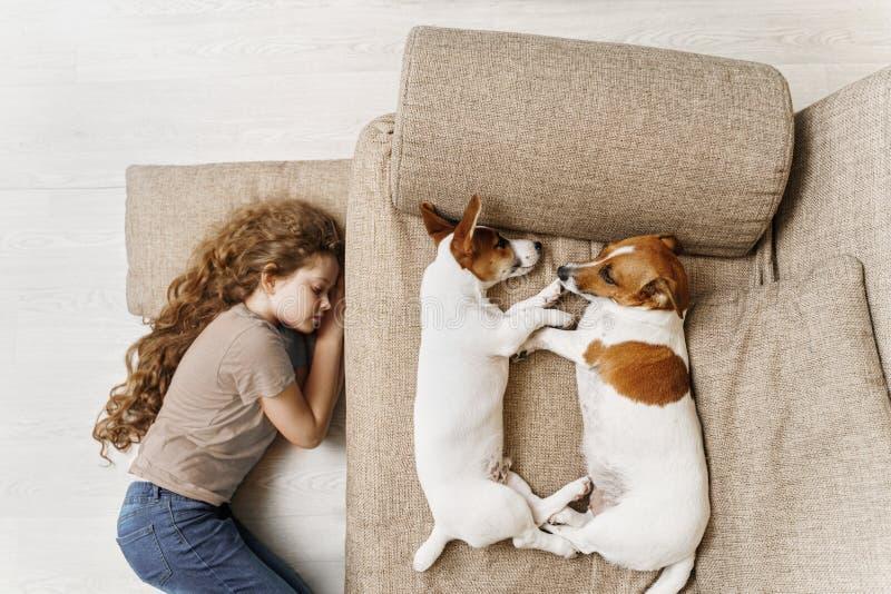 Två Jack Russell sover på sängen, och ägaren av flickan sover på golvet royaltyfria bilder