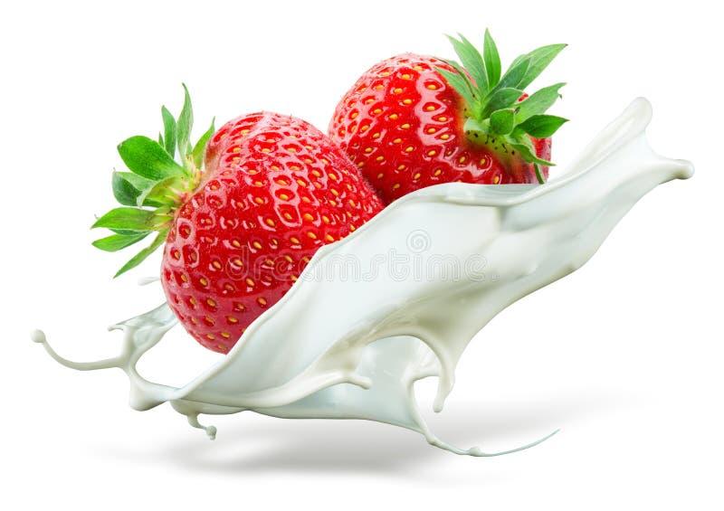 Två jordgubbar som faller in i, mjölkar isolerat som white för färgstänkvattenvattenfall royaltyfri fotografi
