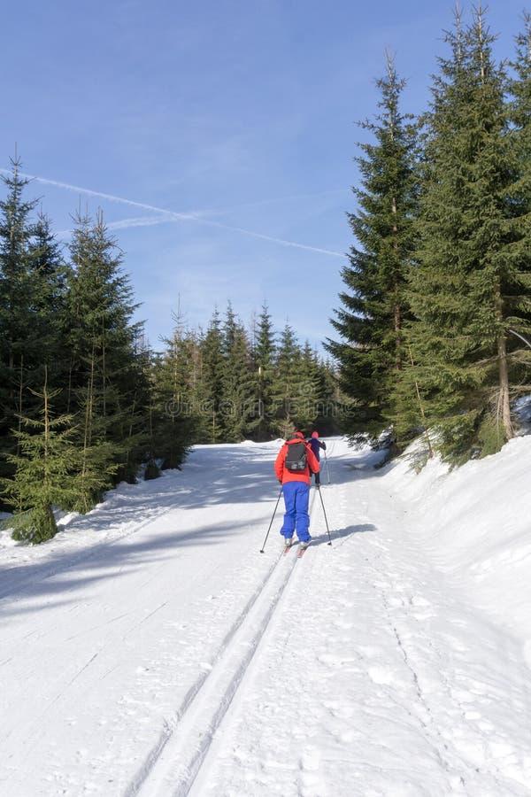 Två körningar för längdlöpningskidåkare på ansat skidar spåret i solig vinterdag royaltyfri fotografi