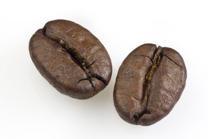Två kaffebönor royaltyfri fotografi