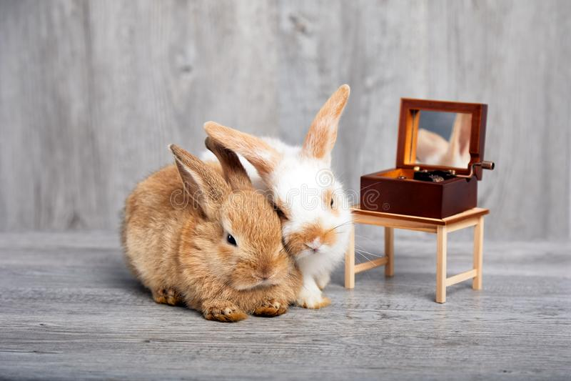Två kaniner som ner tillsammans lägger och lyssnar till musikasken arkivfoton