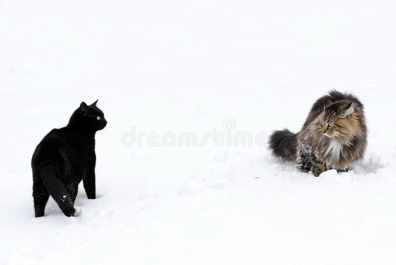 Två katter arkivfoton