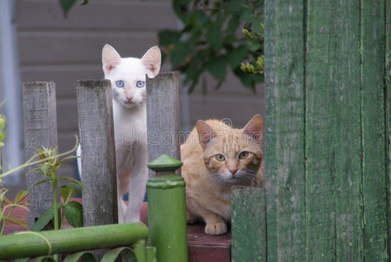 Två katter bak staketet arkivbild