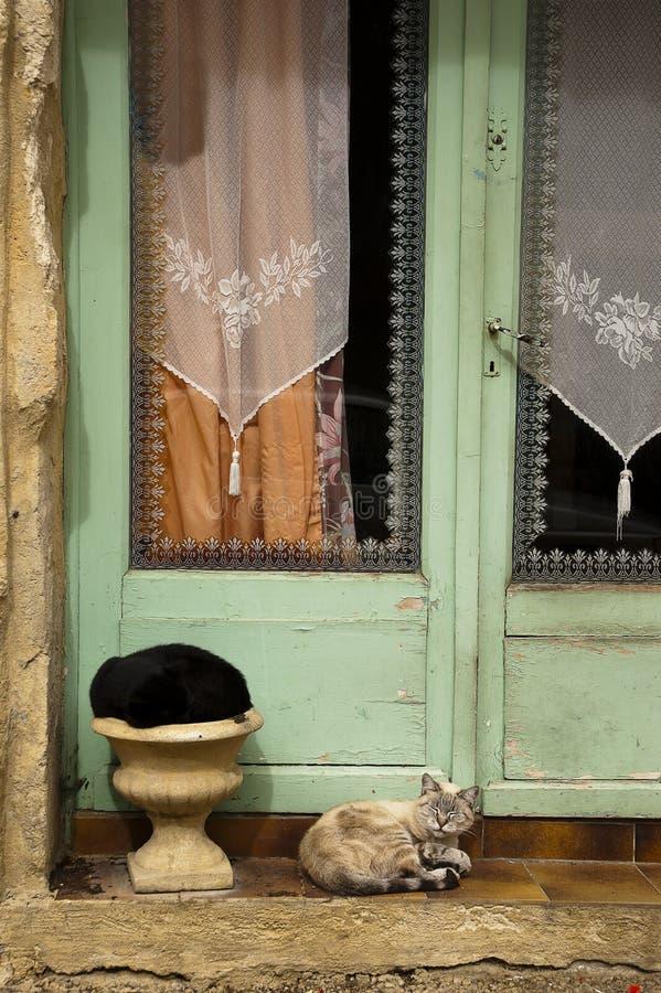 Två katter och wood dörr Saint-Cyprien Dordogne royaltyfria bilder
