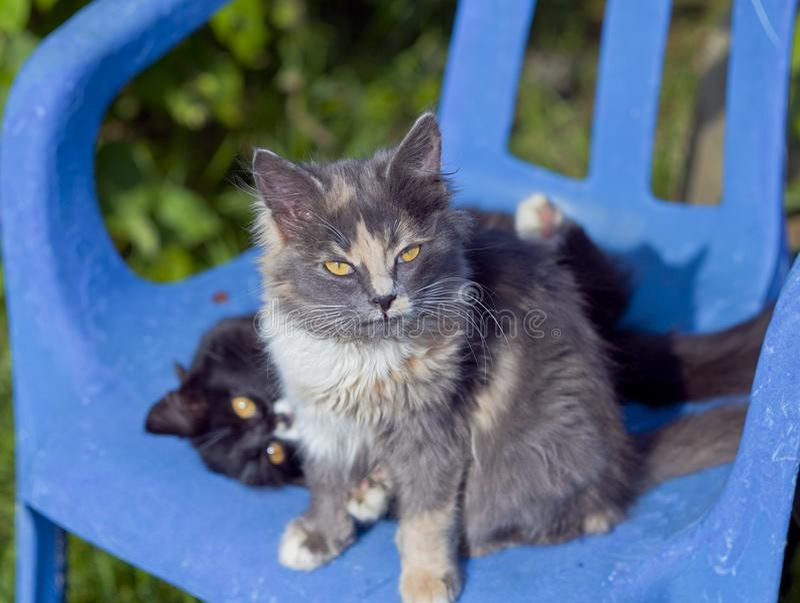 Två katter på en stol royaltyfri foto