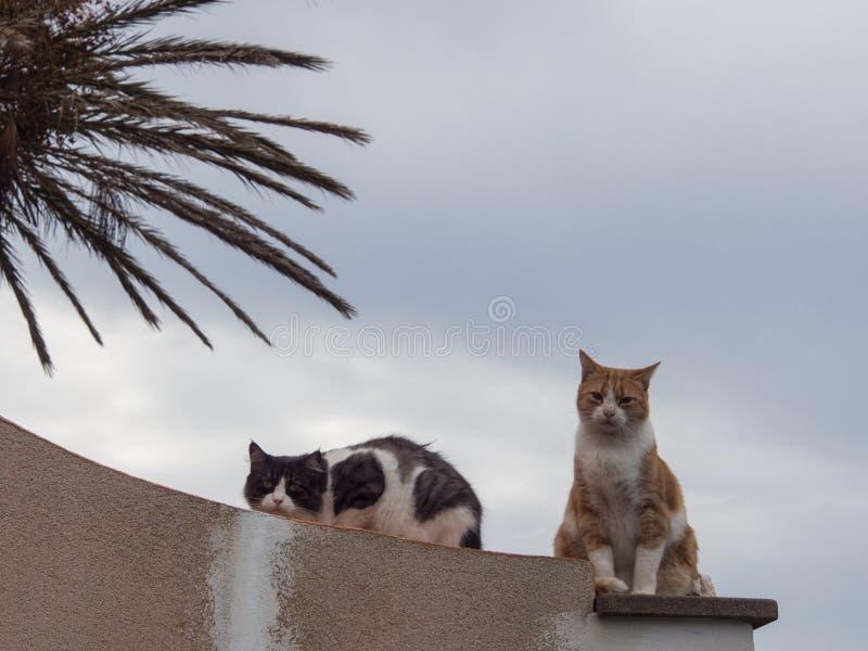 Två katter poserar för ett härligt fotografi royaltyfri fotografi
