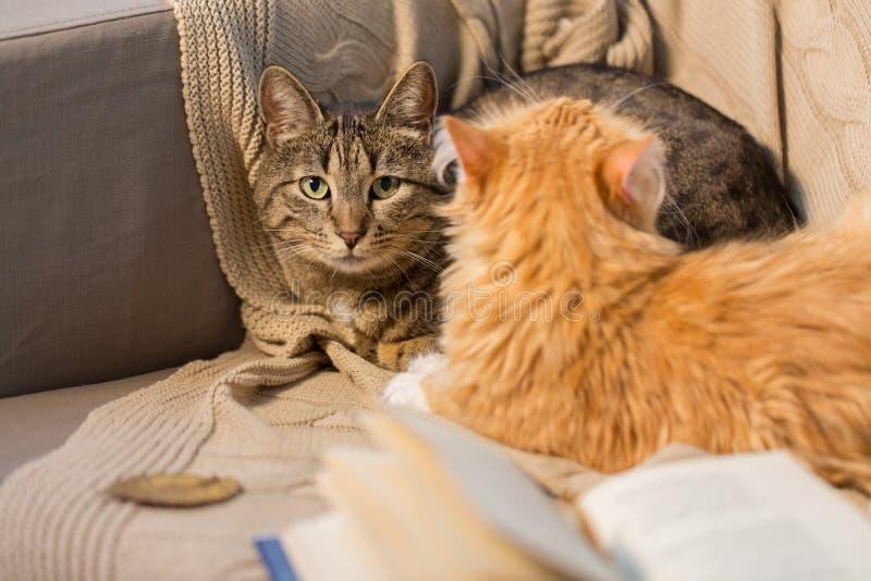 Två katter som hemma ligger på soffan royaltyfria foton