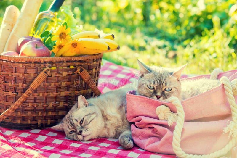 Två kattlögner på en filt nära en picknickkorg royaltyfri fotografi