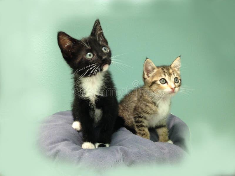 Två kattungar - en strimmig katt och en smoking royaltyfri fotografi