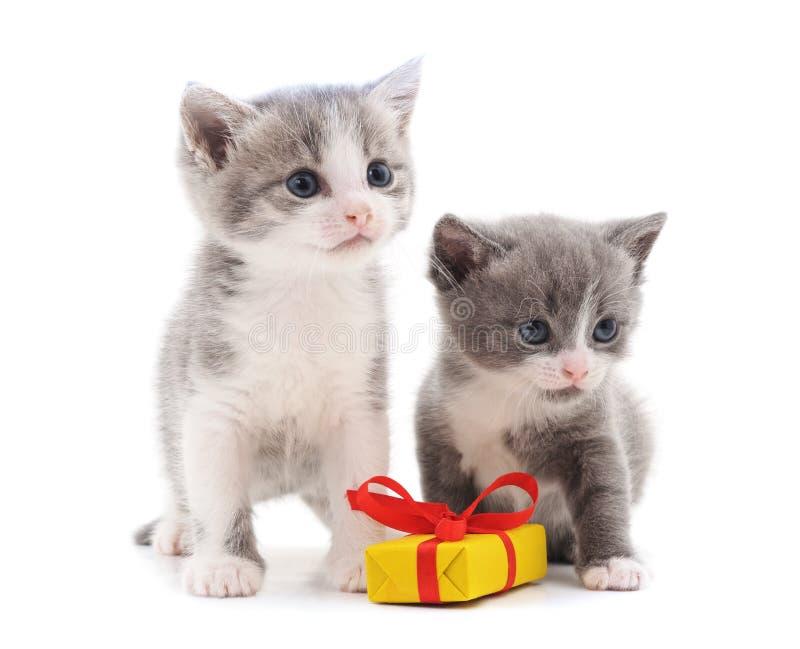 Två kattungar med en gåva arkivbilder