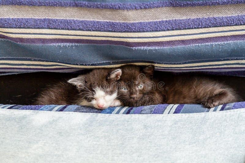 Två kattungar på en blå soffa royaltyfri foto