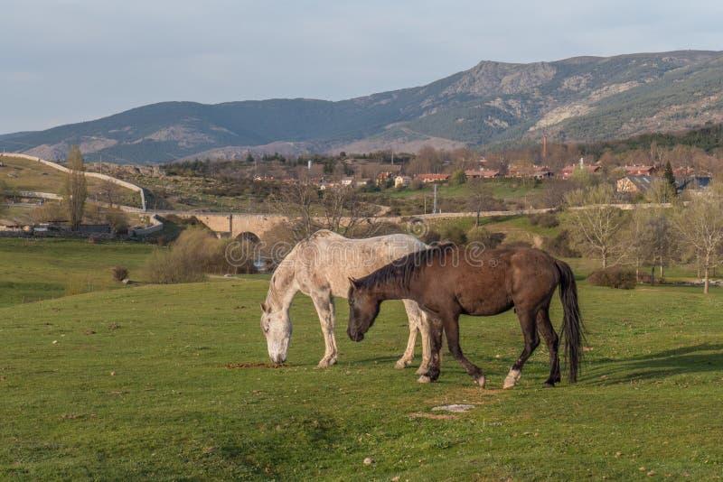 Två kontrastera hästar som betar i en dal royaltyfri foto