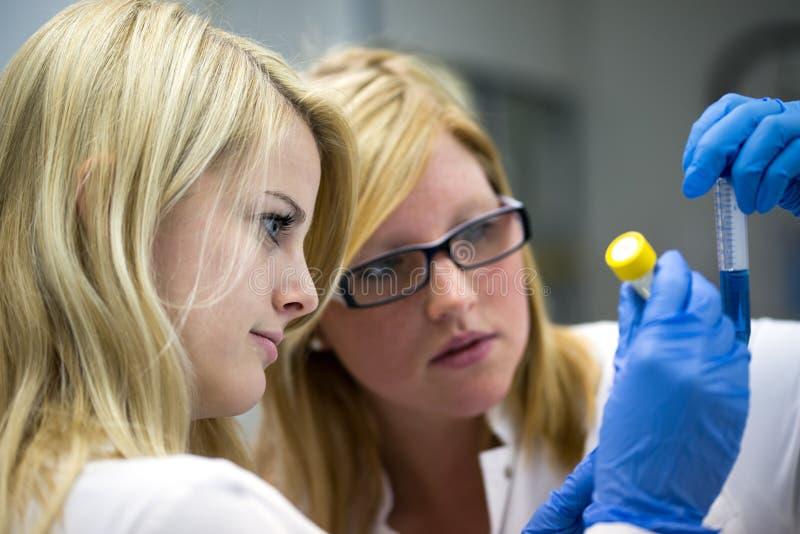 Arbete i laboratorium arkivfoto