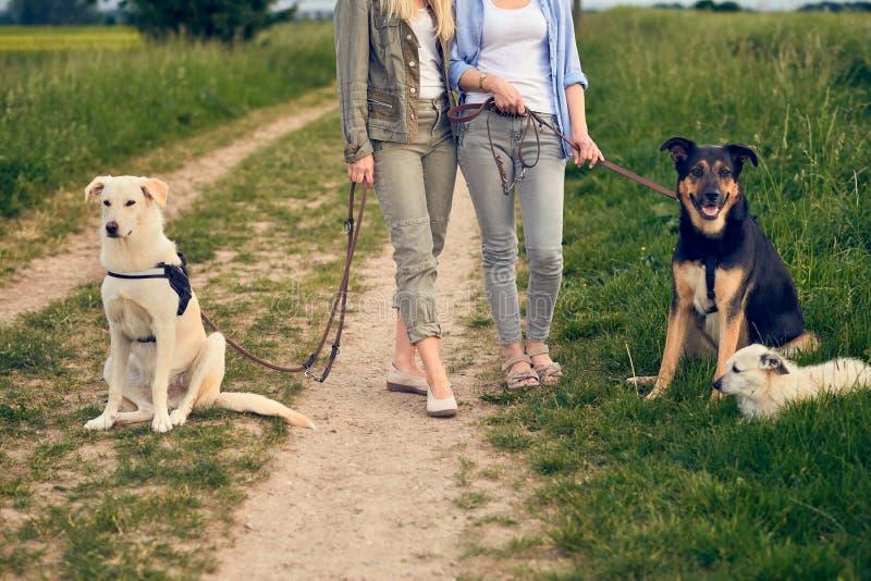 Två kvinnor som går deras hundkapplöpning på en lantlig grusväg arkivfoton