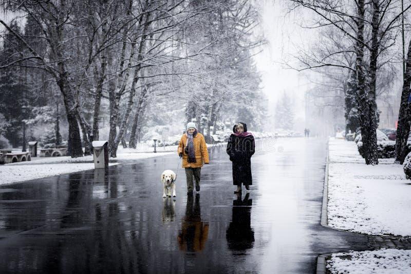 Två kvinnor som går en hund i vintern royaltyfri bild