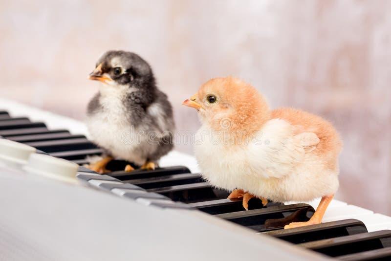 Två lilla fågelungar på tangenterna av pianot Första steg i mu royaltyfria bilder