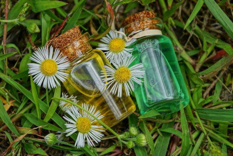 Två lilla glasflaskor med olja bland vita tusenskönor ligger på grönt gräs arkivfoton