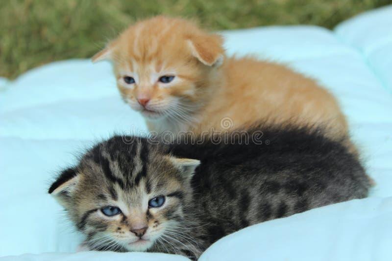 Två lilla Tabby Kittens royaltyfria foton