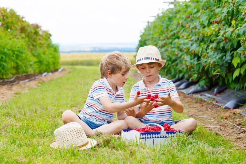 Två lilla vänner, ungepojkar som har gyckel på hallonlantgård royaltyfri bild