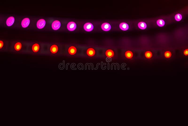 Två linjer av röda och purpurfärgade neonljus på svart arkivfoton