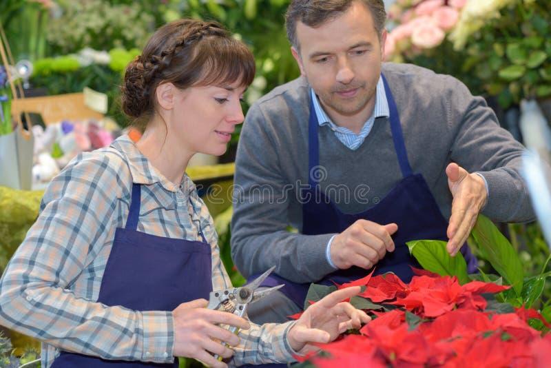 Två lyckliga trädgårdsmästare som talar i växthus arkivbild
