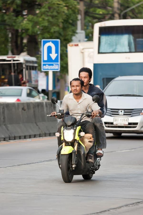 Två män ingen hjälm med hunden som kör mopeden royaltyfria foton