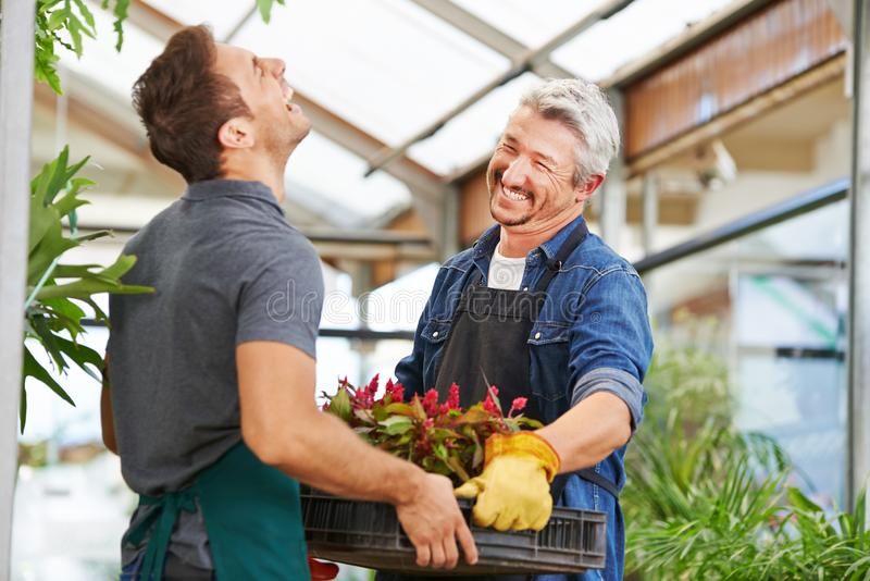 Två män som blomsterhandlare, i att arbeta i trädgården royaltyfri fotografi