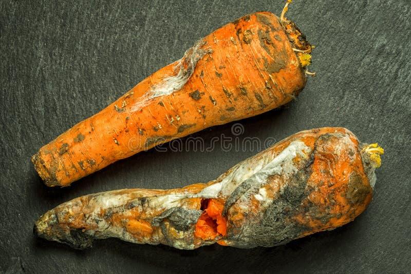 Två mögliga dåliga morötter arkivbild