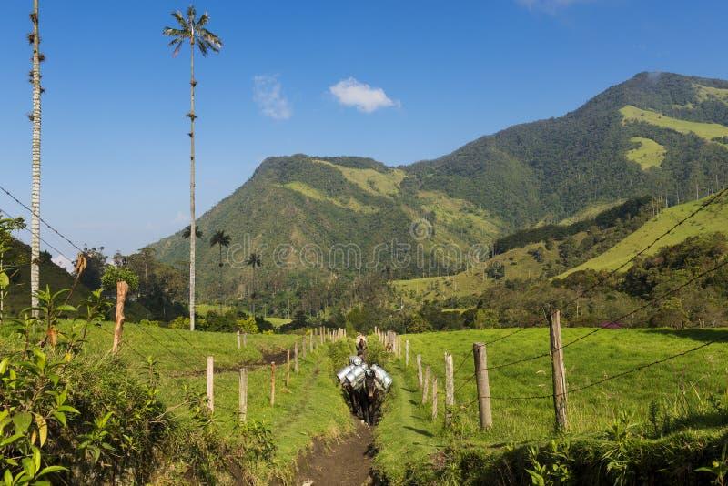 Två man och hästar i en slinga i den Cocora dalen Valle del Cocora i Colombia, Sydamerika royaltyfri foto