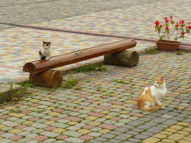 Två orange katter i gården royaltyfri fotografi