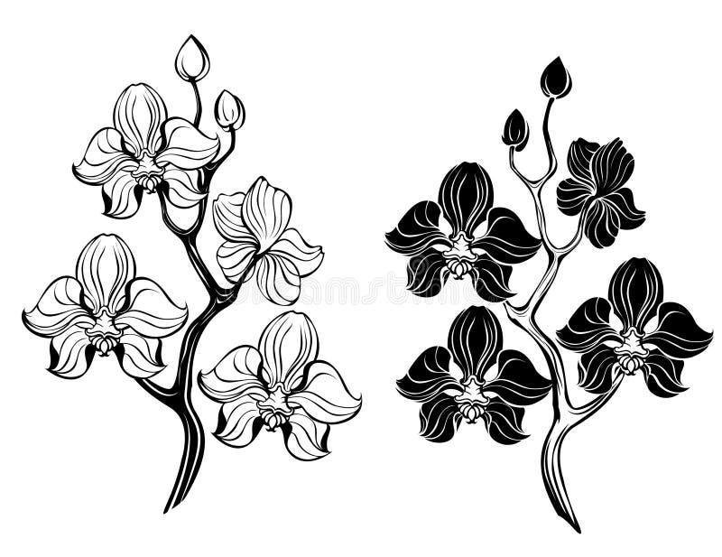 Två orchids vektor illustrationer