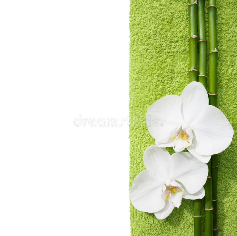 Två orkidér och filialer av bambu royaltyfri bild