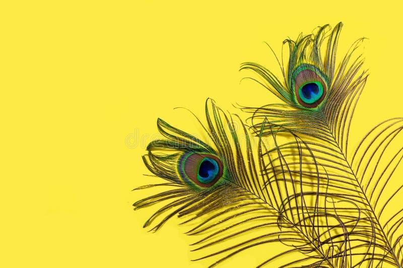 Två påfågelfjädrar på en gul bakgrund, den bästa sikten, lägenhet lägger Ljusa f?rger f?r trend Utrymme f?r text royaltyfria foton