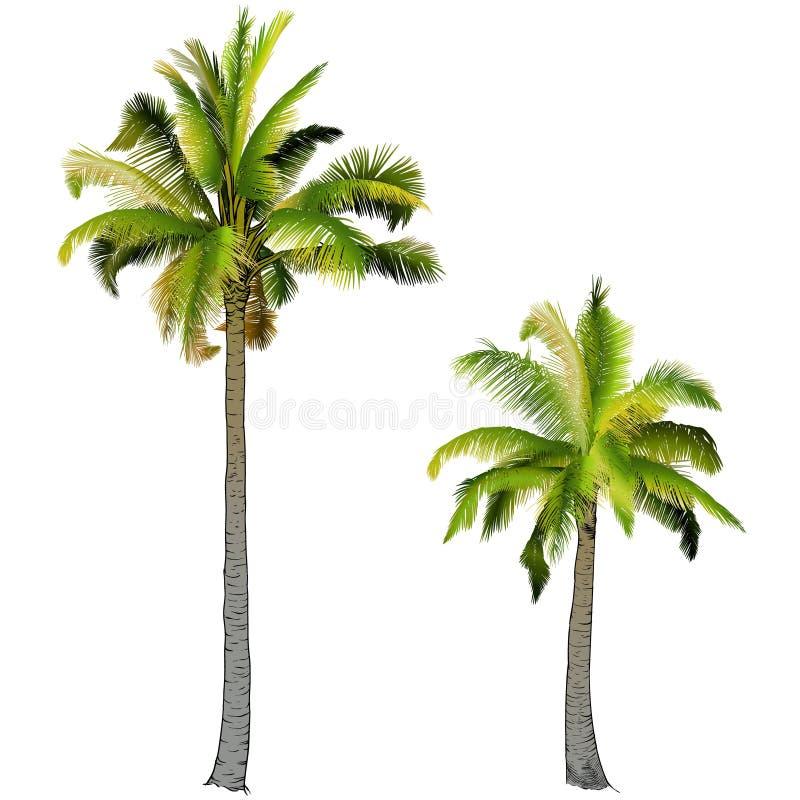 Två palmträd, royaltyfria foton