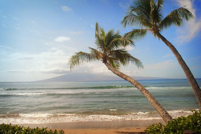 Två palmträd lutar på tropiskt strandhav beskådar arkivfoton
