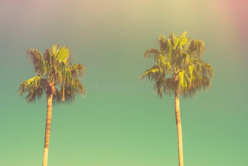 Två palmträd på tonad ljus turkoshimmelbakgrund utrymme för kopia för 60-taltappningstil för text tropisk lövverk royaltyfri bild