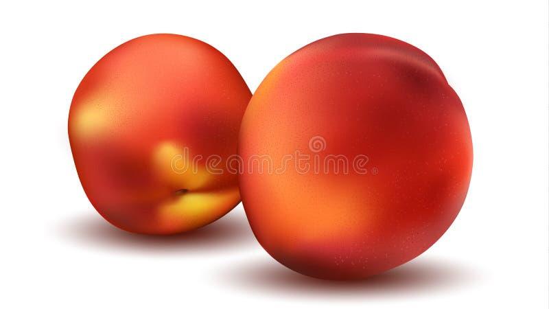 Två Peaches Close Up Den sunda naturen bantar begrepp stock illustrationer