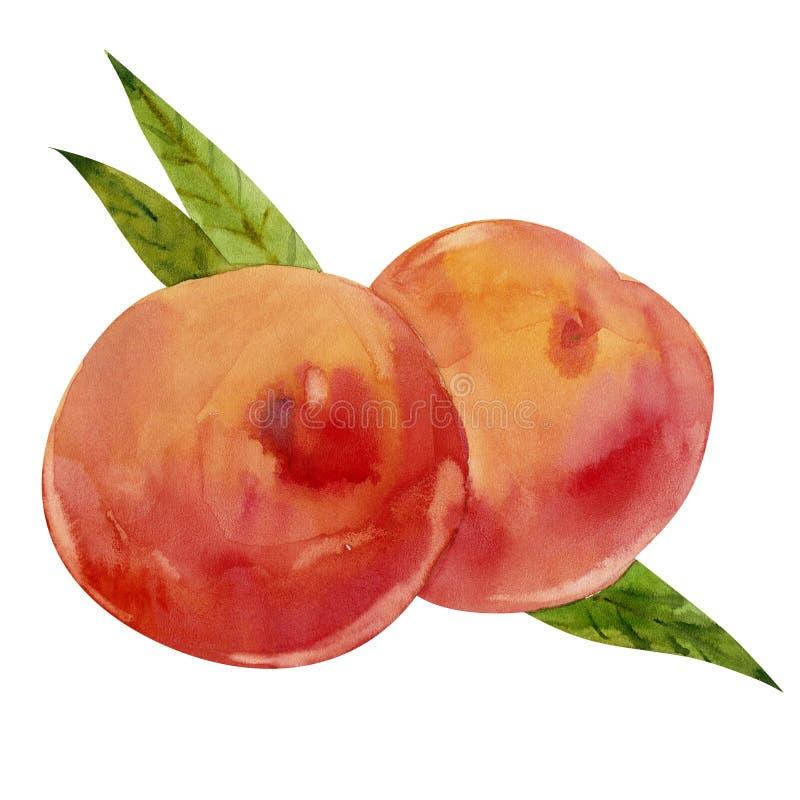Två persikor med leaves royaltyfri illustrationer