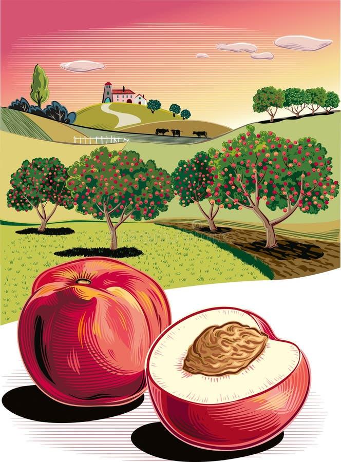 Två persikor och fruktträdgård stock illustrationer