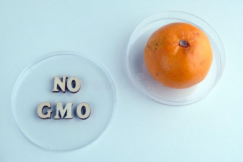Tv? Petri disk, uttryck som ingen GMO gjorde fr?n den tr?bokst?ver och tangerin Begrepp av medicinsk forskning eller laborationer arkivbild