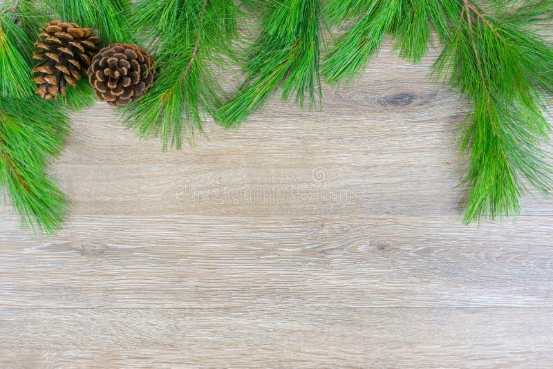 Två pinecones på vitt sörjer lövruskor med kopieringsutrymme arkivfoton