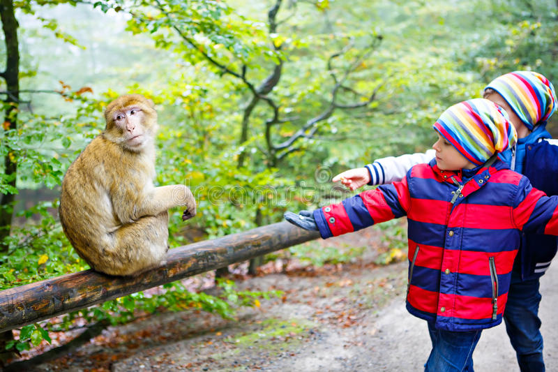 Två pojkar för små ungar i färgrik kläder som matar apan arkivbild