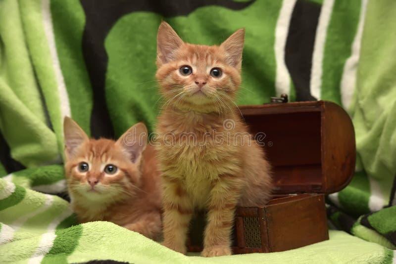 Download Två röd kattunge och ask fotografering för bildbyråer. Bild av close - 76700777