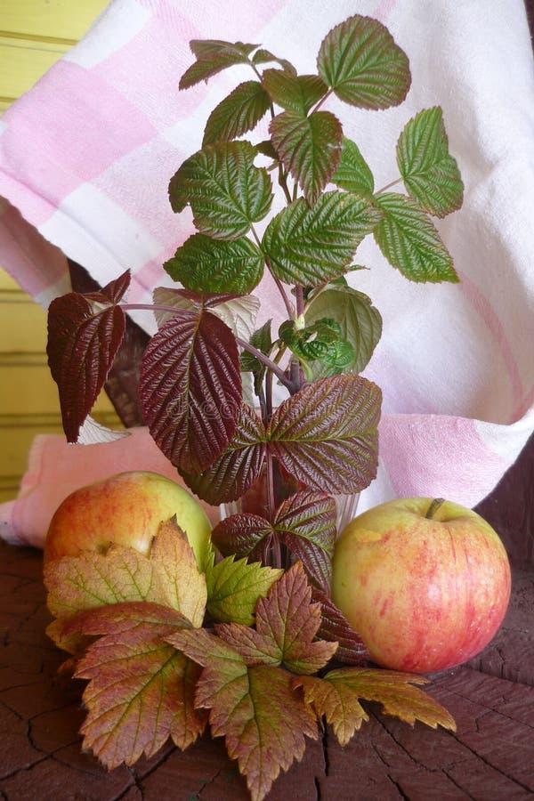 Två röda äpplen ligger på en trästubbe som täckas med den vita tablecloen royaltyfria bilder